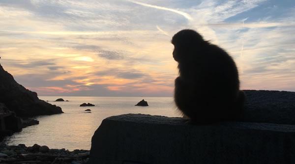 2016年は丙猿